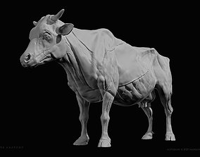 Cow-Bovine Anatomy 3D printable model