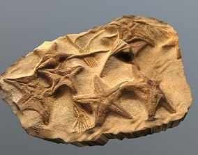3D asset Fossil Starfish Rock