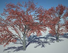 3D asset Amelanhier Red tree purple tree