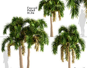 Set of Foxtail Palm or Wodyetia Bifurcata Palm 3D model 3
