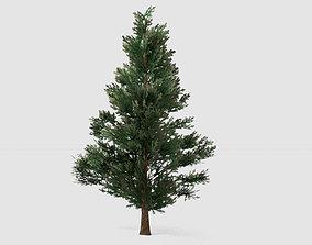 Fir tree 3D model VR / AR ready