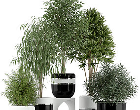 3D Plants collection 230