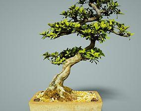 3D model VR / AR ready Bonsai Tree