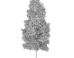 Poplar 1 Populus 44911 3D