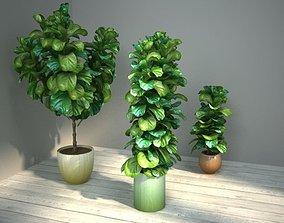 3D fiddle leaf fig ficus lyrata
