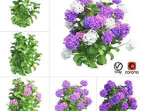 Plants Hydrangea set 02 3D model