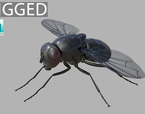 3D Fly insect