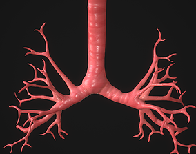 Human Bronchi 3D asset