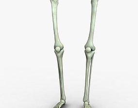 3D Human Leg Bones accurate