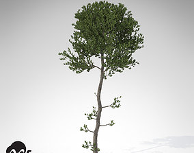 3D XfrogPlants Sea Pine