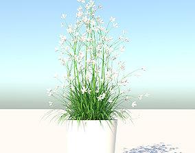 Flower 3D model realtime