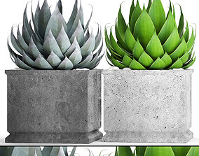 Agave collection 2 3D