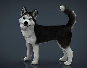 Siberian Husky 3D model