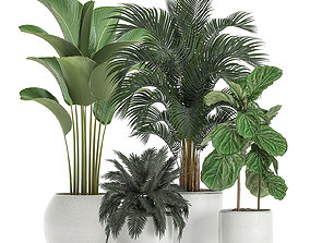 Plants in a white pot for the interior 668 3D model
