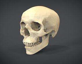 3D asset Human Skull