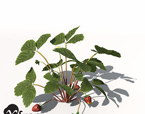 3D model XfrogPlants Strawberry