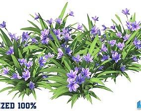 Babiana Blue Flower Optimized 3D model