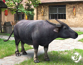 animated Asia Buffalo 3D model for 3ds Max