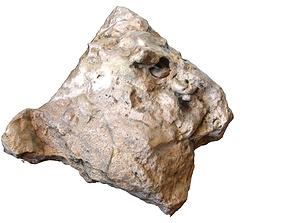 3D asset Fossil Gastropod Stone