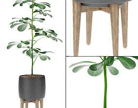 Plant in Pot Flowerpot Exotic Plant 3D model