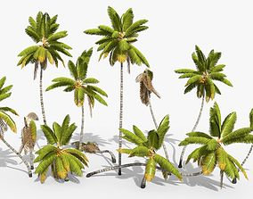 Coconut Palm Trees Asset 1 3D model