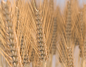 3D model Wheat stalk