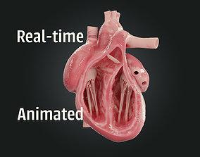 Realistic Human Heart 3D model