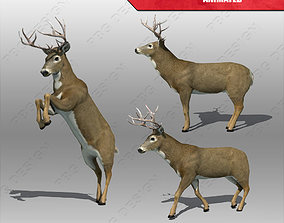 3D asset Deer Animated