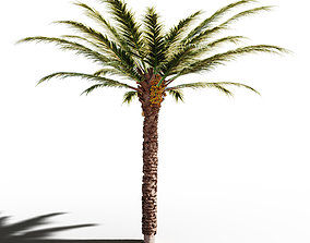 Palm Tree palm other 3D
