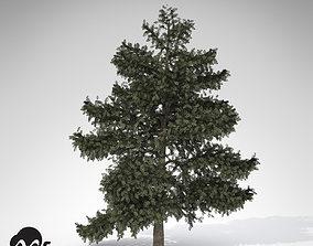 3D XfrogPlants Atlas Cedar