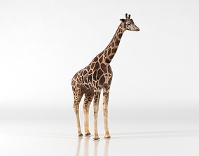 Giraffe 3D model game-ready
