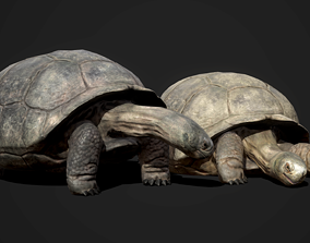 Galapagos Tortoise - GameReady 3D asset
