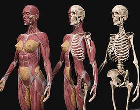 3D model Female Anatomy Kit