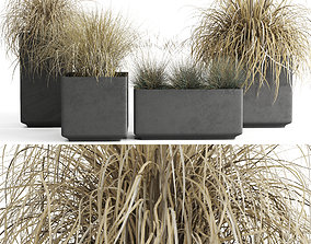 3D Dried Ornamental Cereal Plants