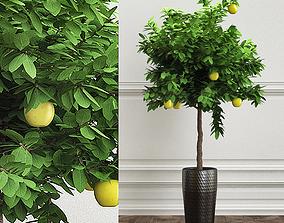 PLANTS 23 3D