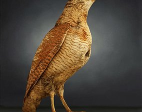 Bird Photorealistic Posed 3D asset game-ready