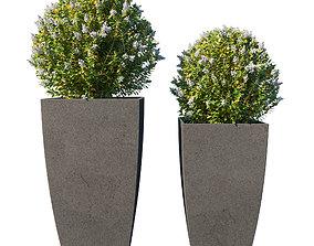 3D Pot Plant Collection 02