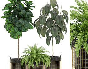 3D model Plants collection 452