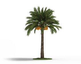 3D Luscious Green Palm Tree
