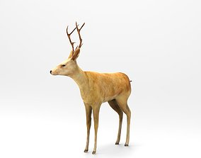 Deer Rigged 3D asset animated