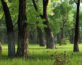 Park Grassland grass Forest 3D