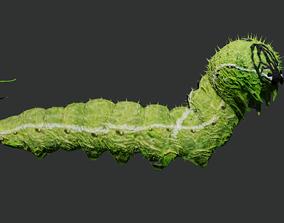 Caterpillar 3D asset