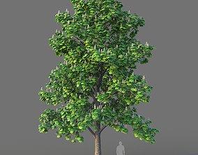 Chestnut Tree 3D