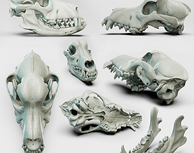 Canine skull for the Medical Area 3D model 3D