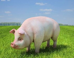 3D asset Pig Sus scrofa domesticus