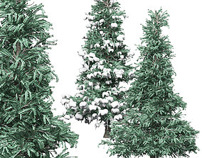 Spruce 3 3D