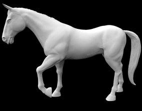 3D asset turkmen horse