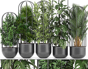 Collection of ornamental plants Exotic plants 3D