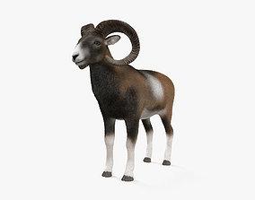 Mouflon HD 3D model