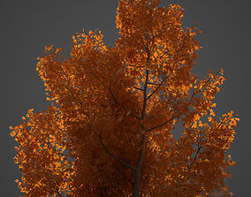 3D 2021 PBR American Planetree Collection - Platanus